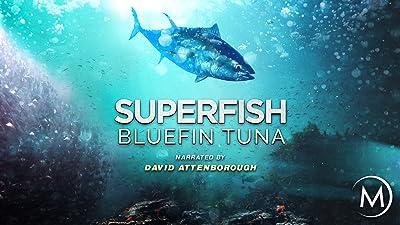 Superfish: Bluefin Tuna - Narrated by David Attenborough