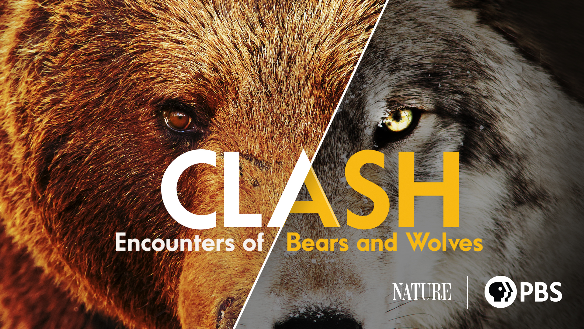 Clash: Encounters of Bears and Wolves