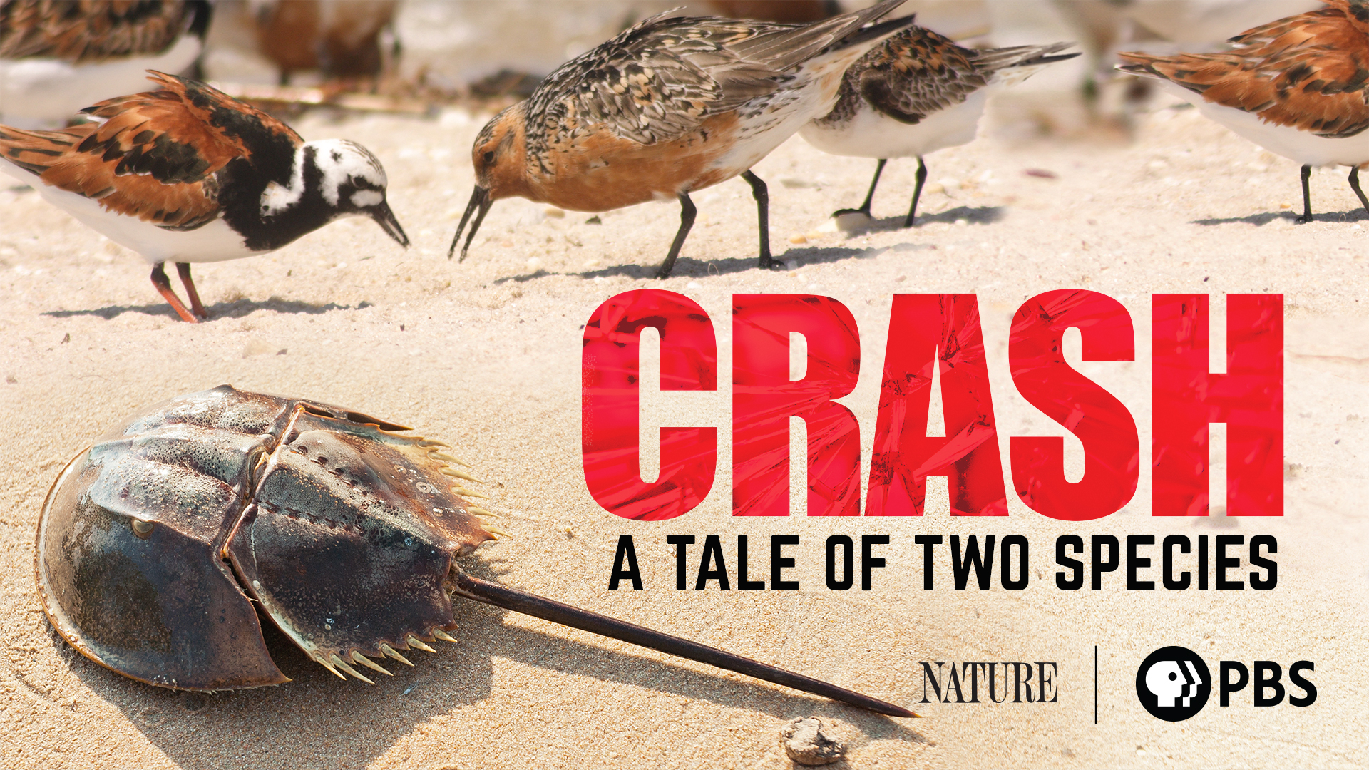 Crash: A Tale of Two Species