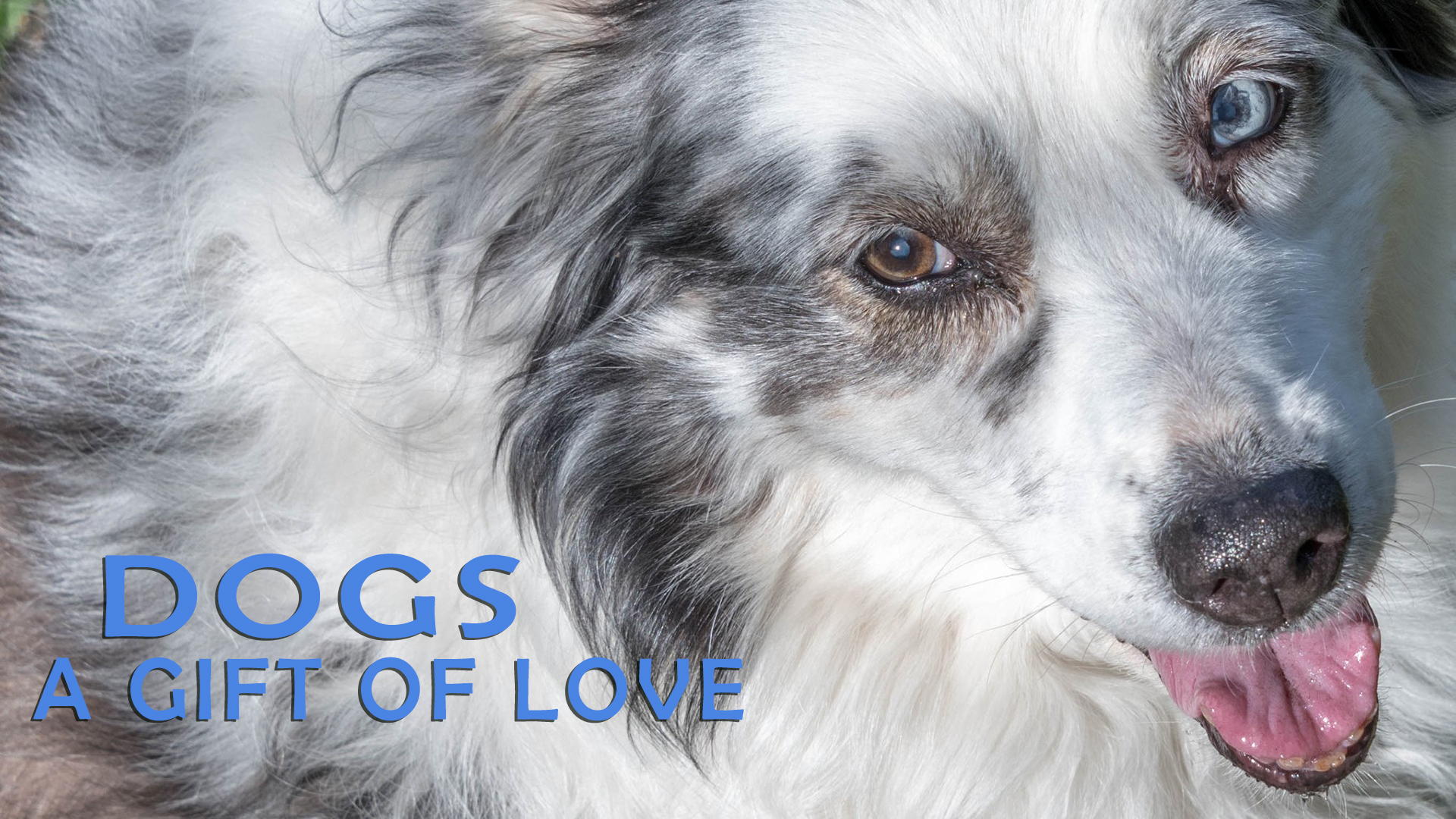 Dogs: A Gift of Love