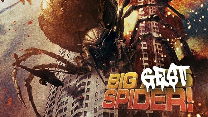 Biggest Spider!