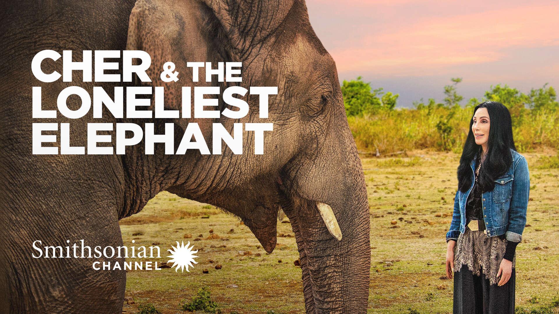 Cher & the Loneliest Elephant