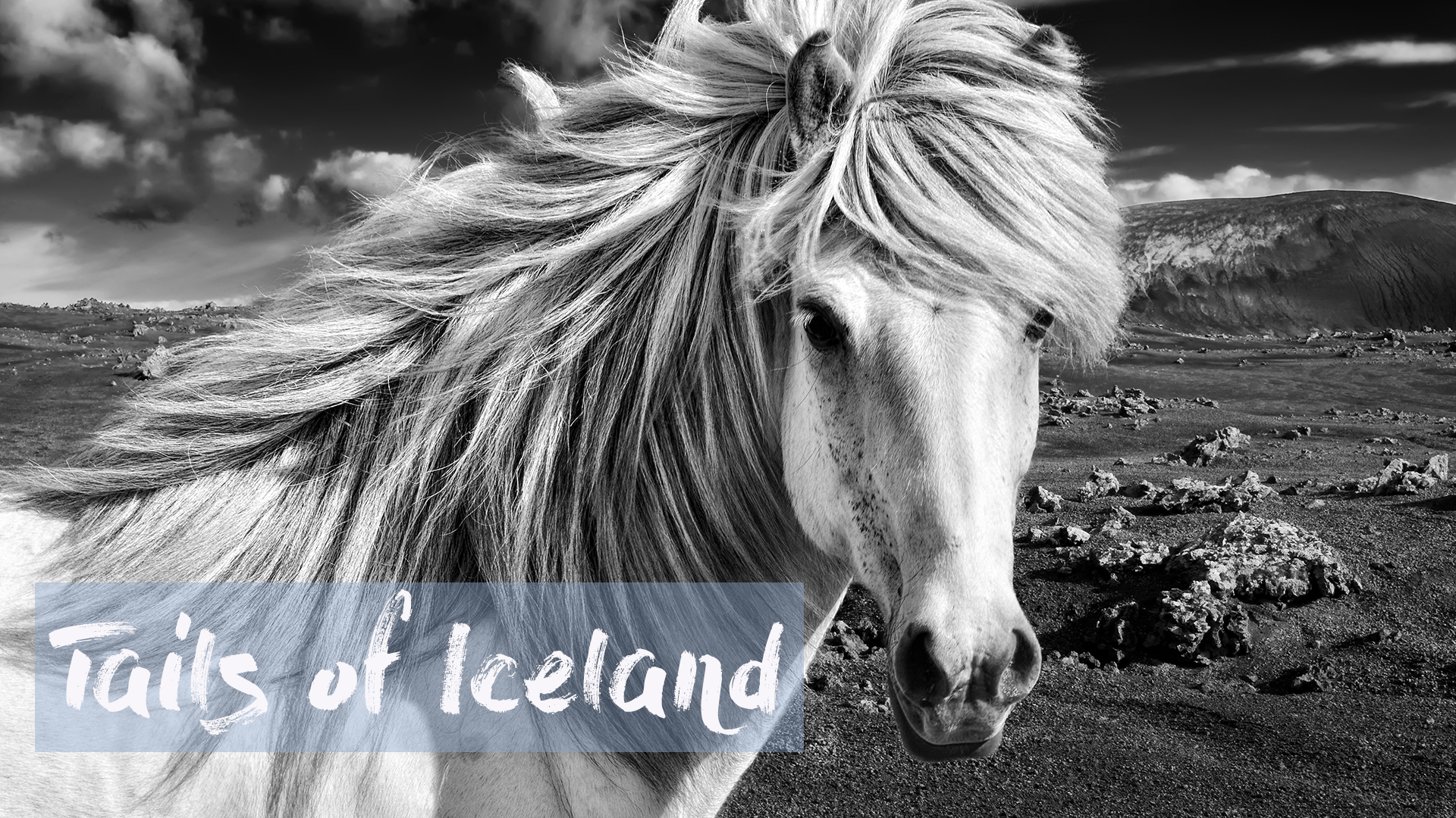 Tails of Iceland