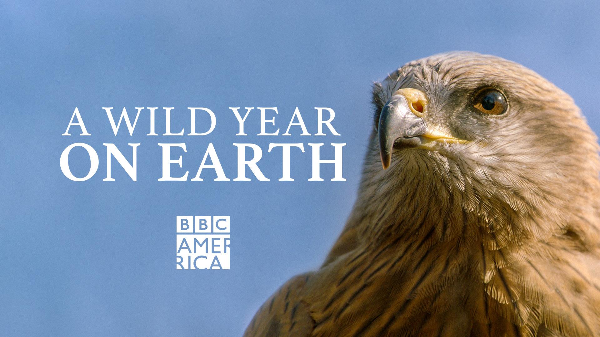 A Wild Year On Earth, Season 1