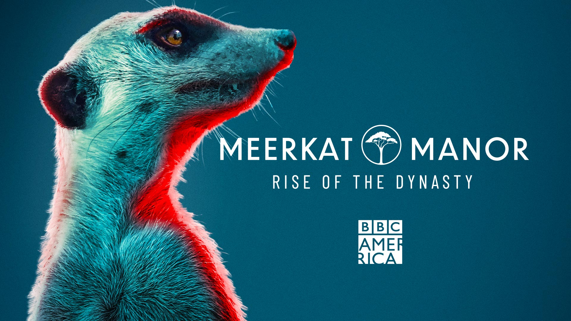 Meerkat Manor: Rise of the Dynasty, Season 1