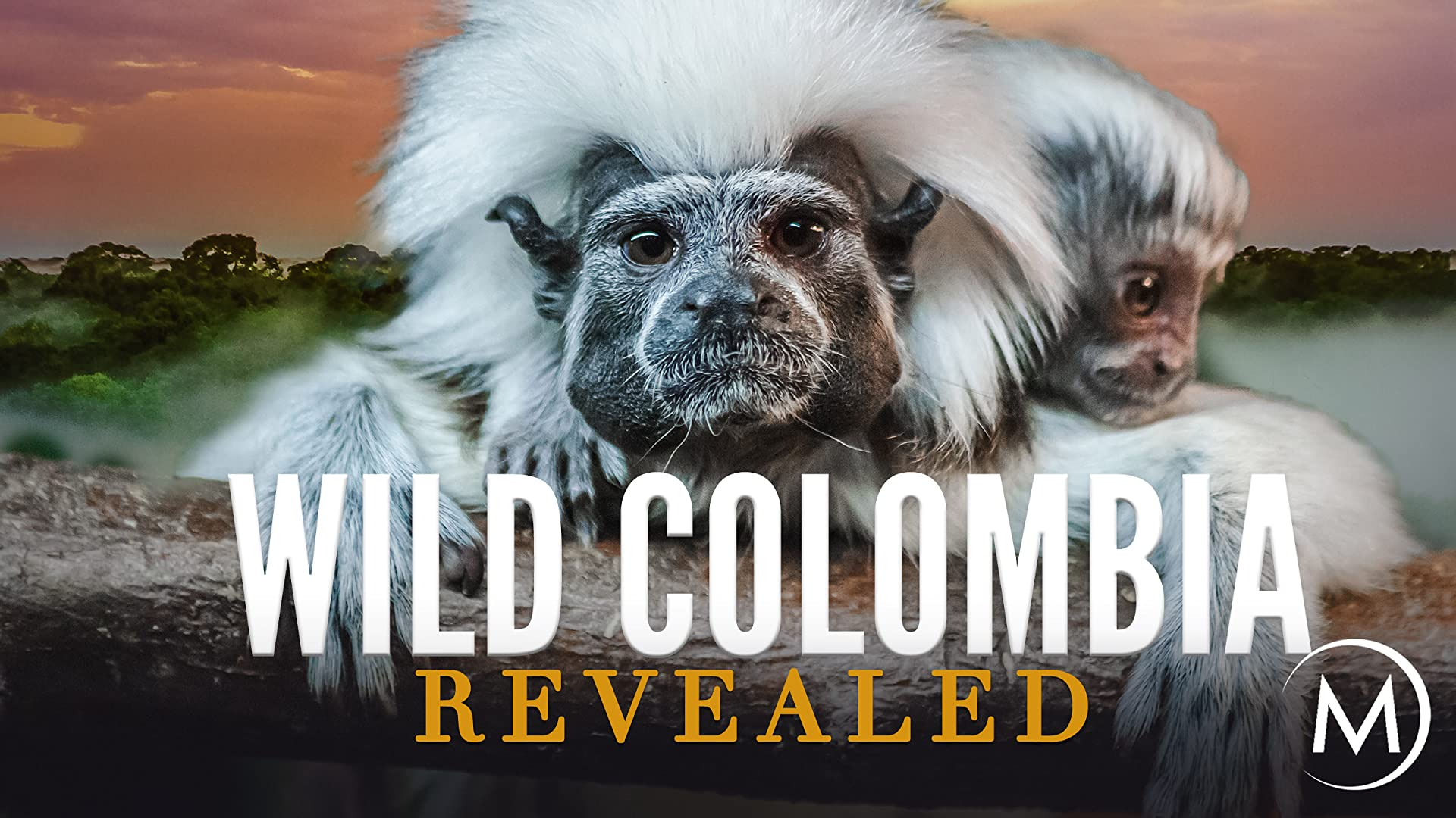 Wild Colombia Revealed