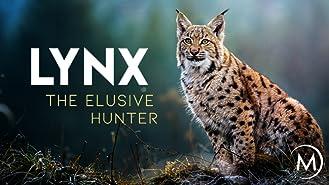 Lynx: Elusive Hunter