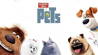 The Secret Life of Pets (4K UHD)