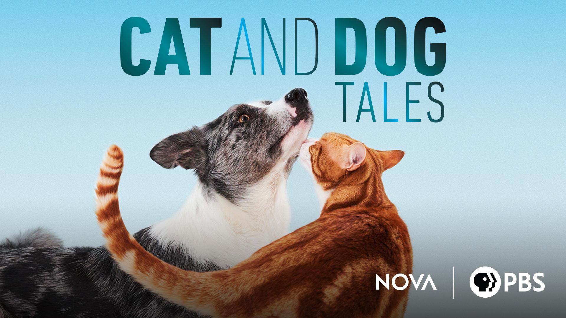 Cat and Dog Tales: Season 1