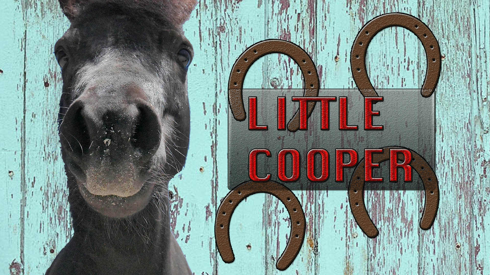 Little Cooper