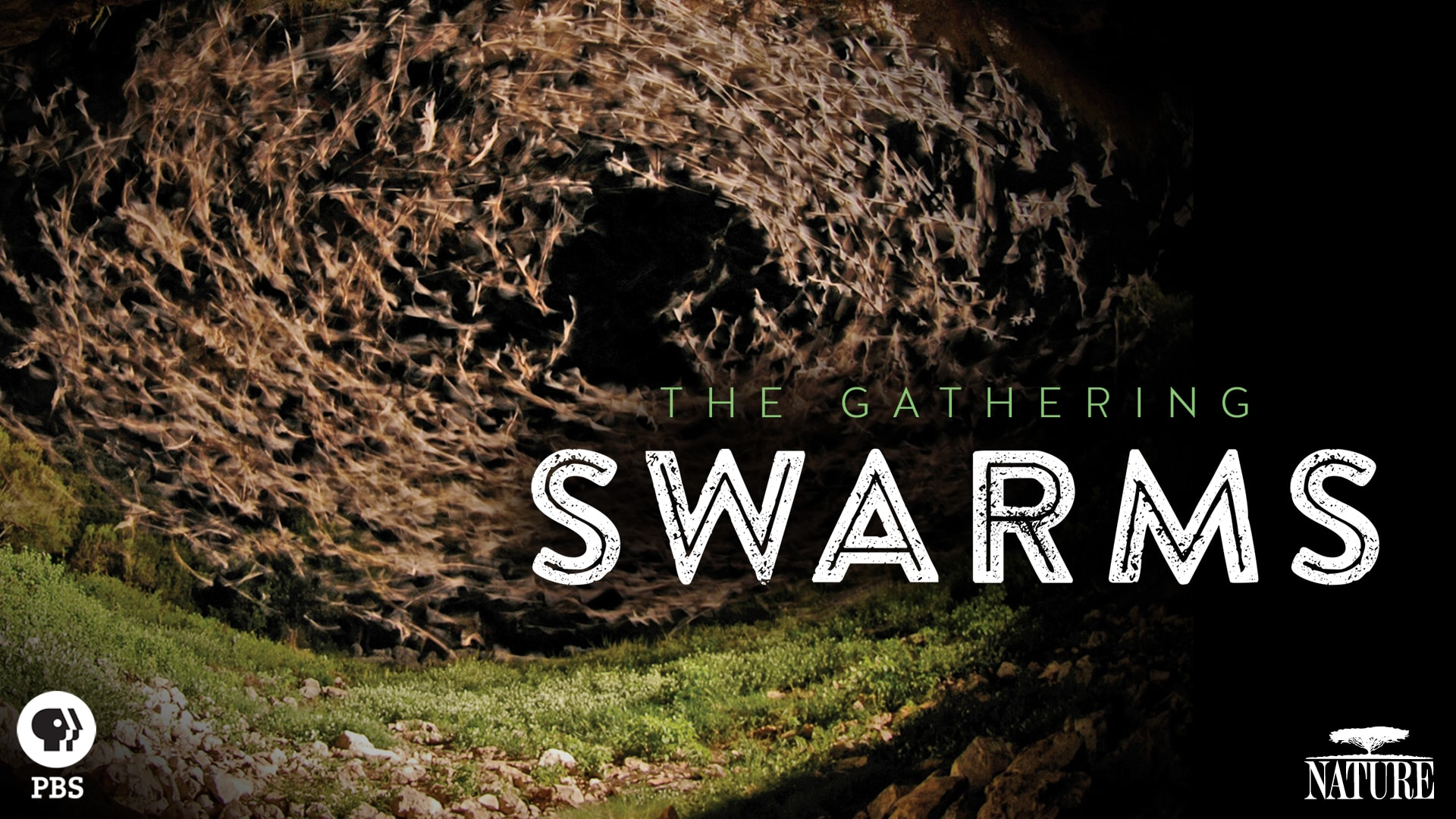 The Gathering Swarms