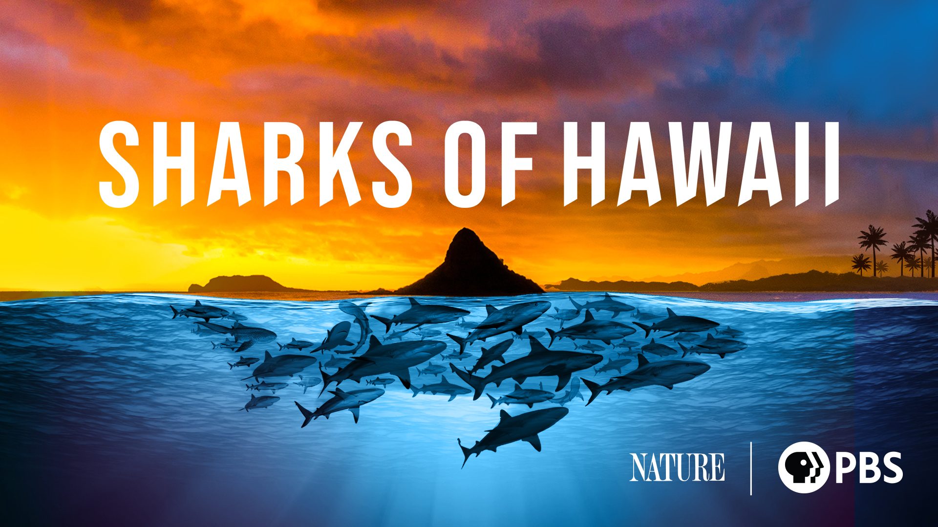 Sharks of Hawaii