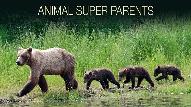 Animal Super Parents - Season 1
