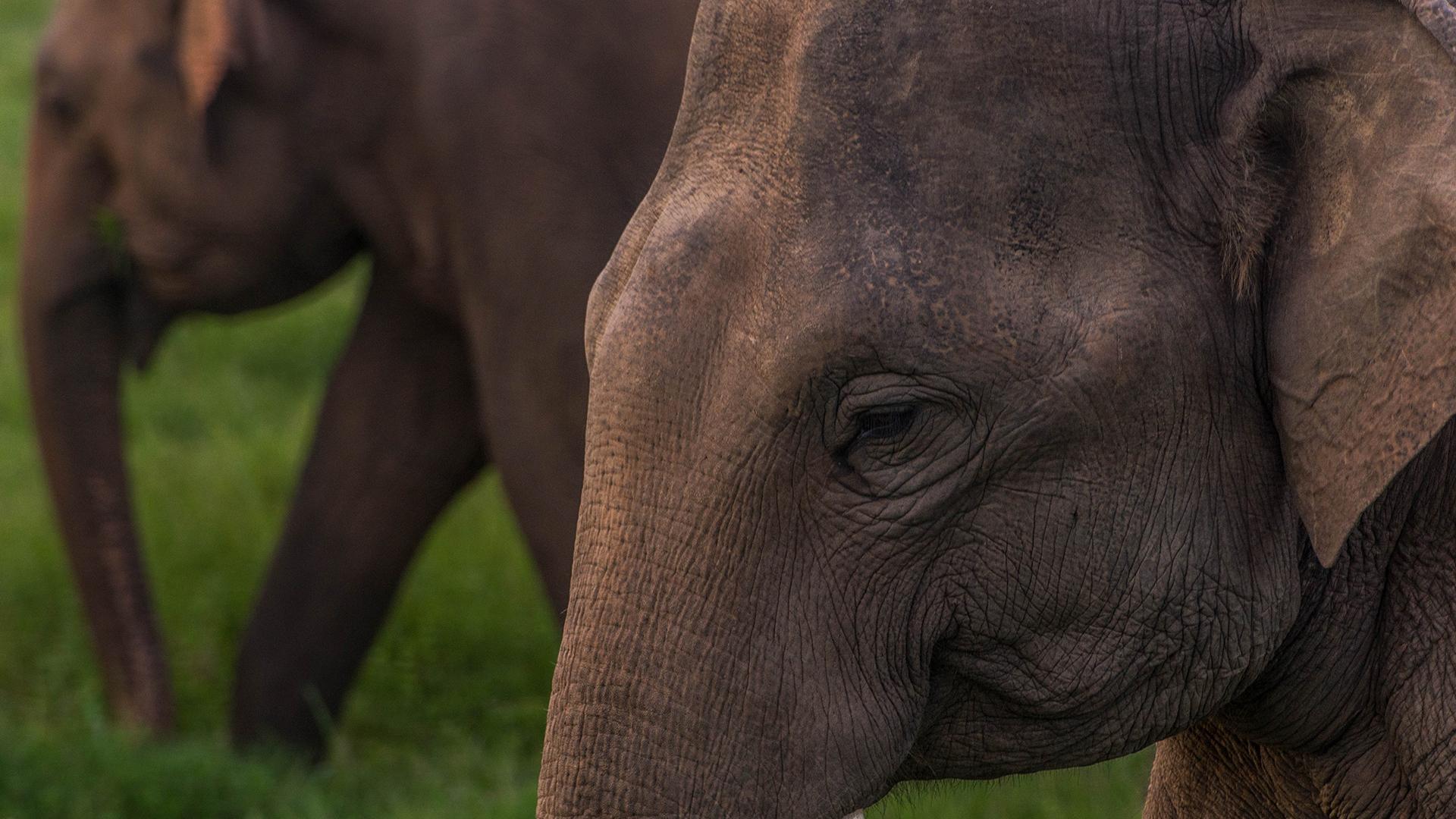 Flight Of The Elephants on Amazon Prime Video UK
