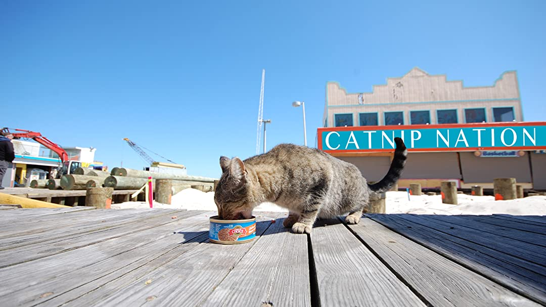 Catnip Nation on Amazon Prime Video UK