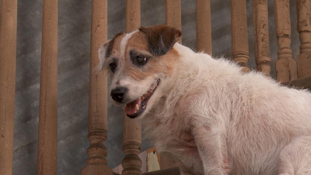A Doggone Adventure on Amazon Prime Video UK