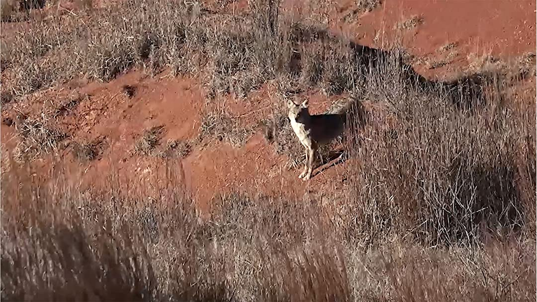Dog Soldier the Coyote Calling and Predator Hunting Show