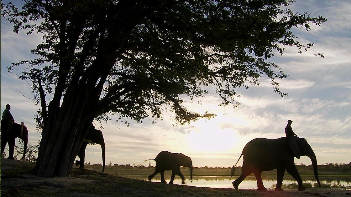 Paseka: The Easter Elephant on Amazon Prime Instant Video UK