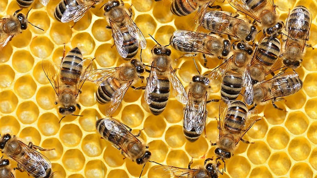 City of Bees on Amazon Prime Video UK