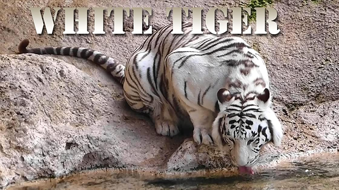 Clip: White Tiger on Amazon Prime Instant Video UK