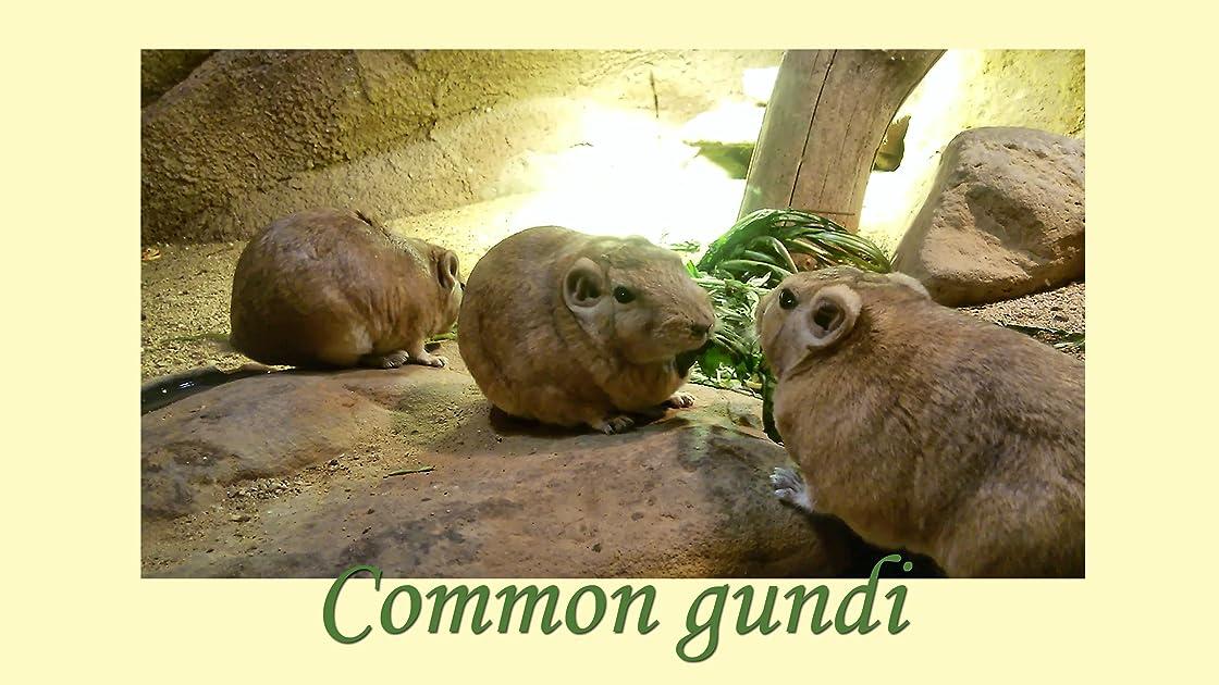 Clip: Common gundi on Amazon Prime Instant Video UK