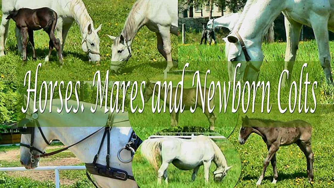 Horses. Mares and newborn colts on Amazon Prime Video UK