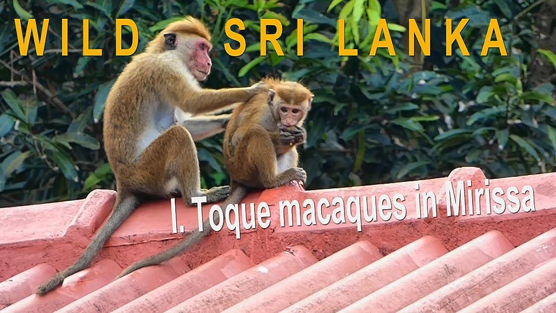 Wild Sri Lanka. I. Toque macaques in Mirissa on Amazon Prime Video UK