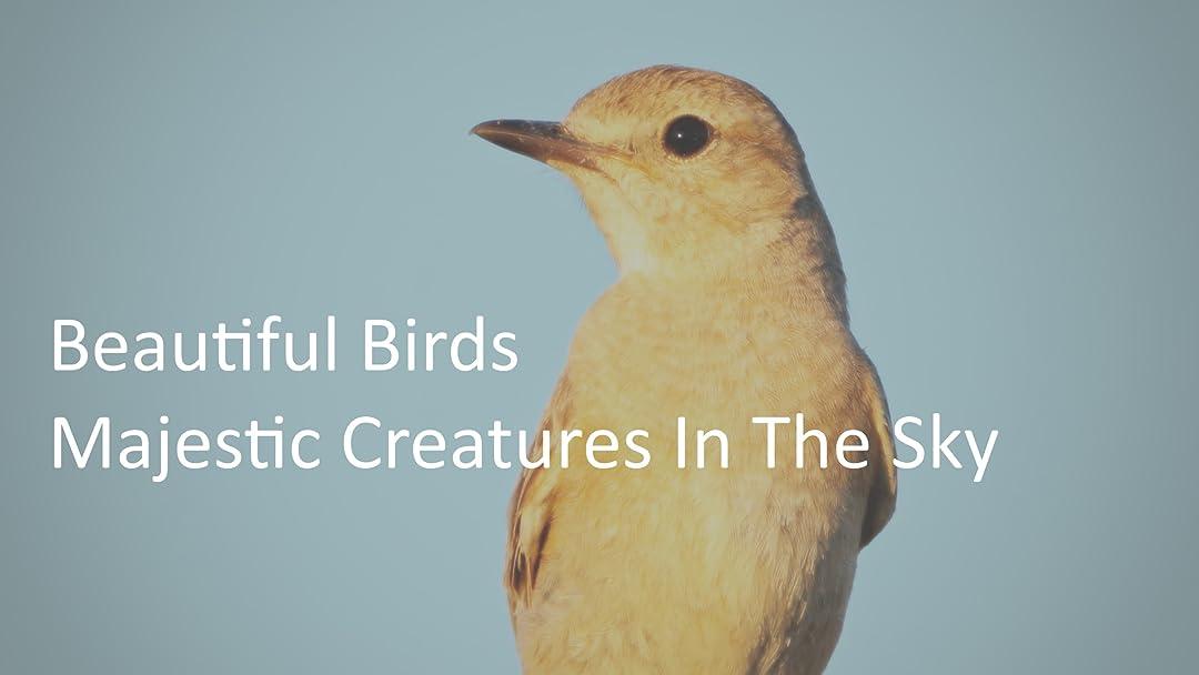 Beautiful Birds - Majestic Creatures in The Sky on Amazon Prime Video UK