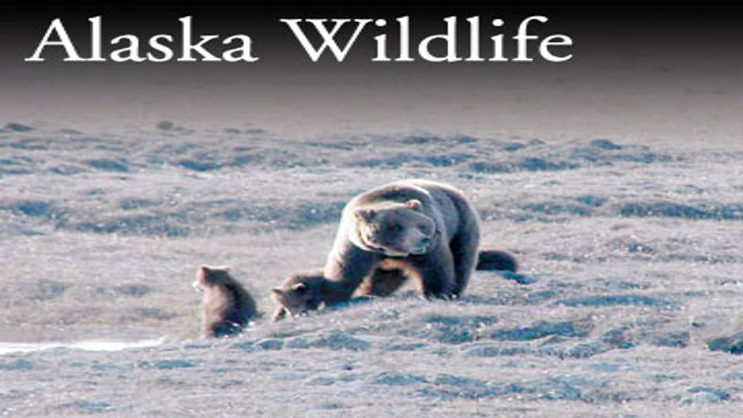 Alaska Wildlife on Amazon Prime Video UK