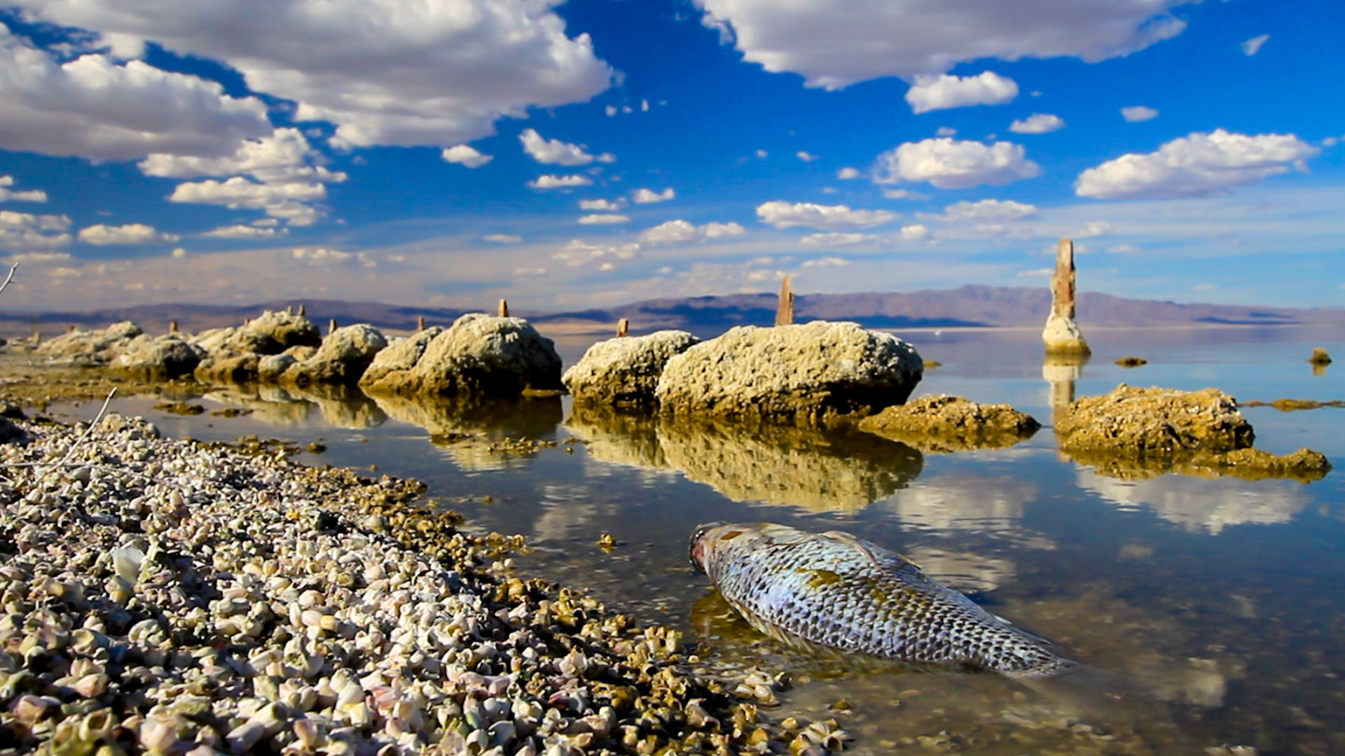 Breaking Point: The Disappearing Salton Sea, An Ecological Disaster