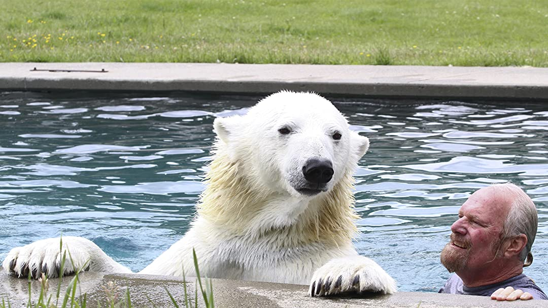 There's A Polar Bear In My Pool! on Amazon Prime Video UK