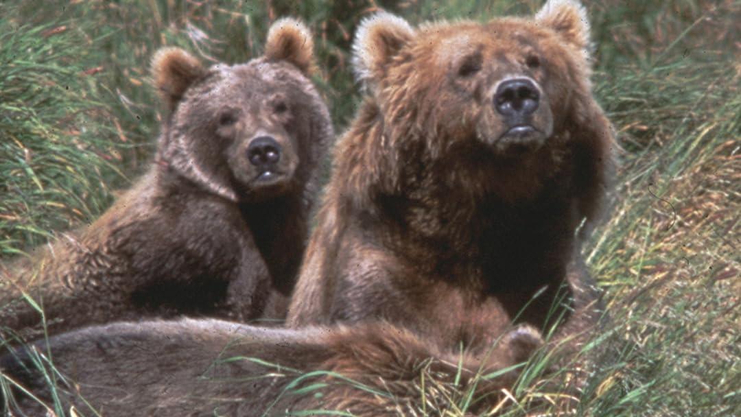 Kodiak: Island of the Great Bear on Amazon Prime Video UK