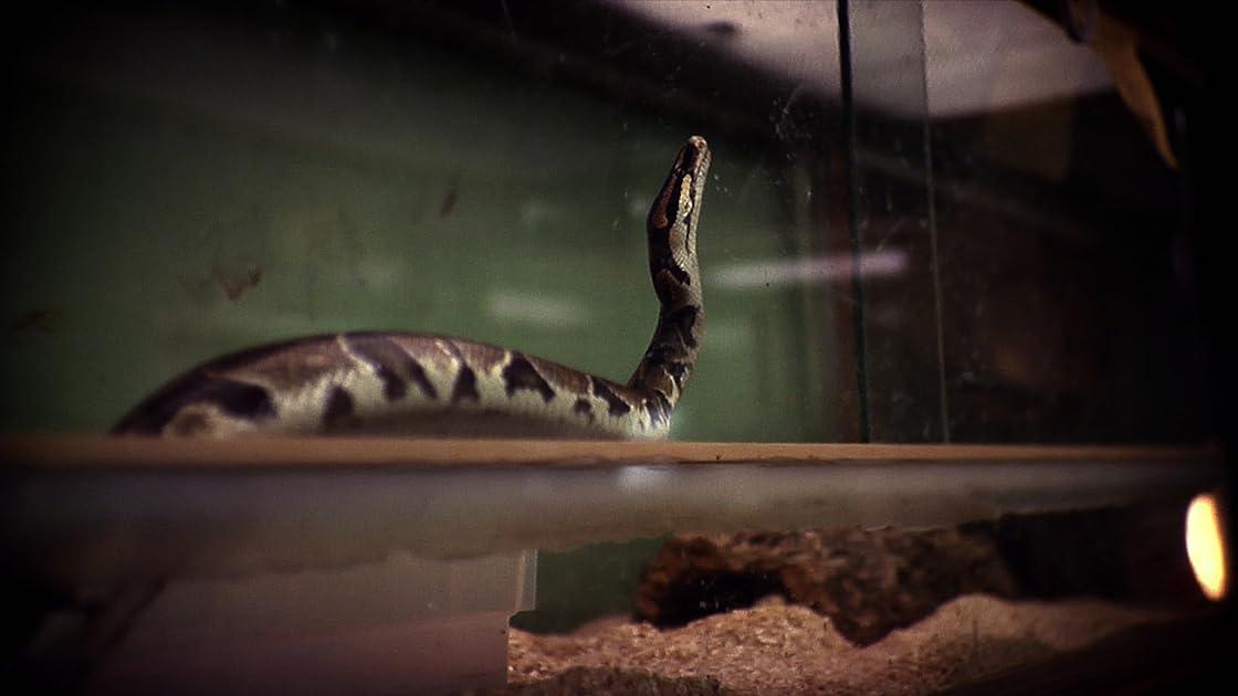 Reptile Rescue on Amazon Prime Instant Video UK