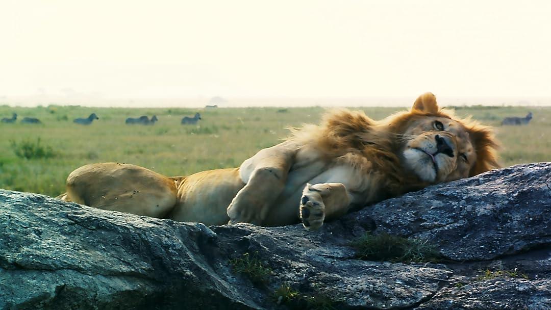 Wildlife in Serengeti part 1 on Amazon Prime Video UK