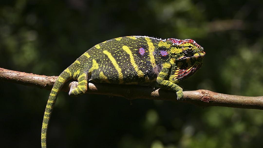 Madagascar - Land of the Chameleons on Amazon Prime Video UK