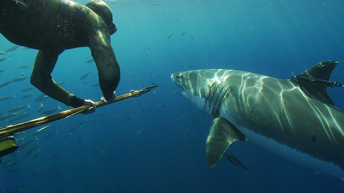 Great White Shark: Beyond the Cage of Fear on Amazon Prime Instant Video UK