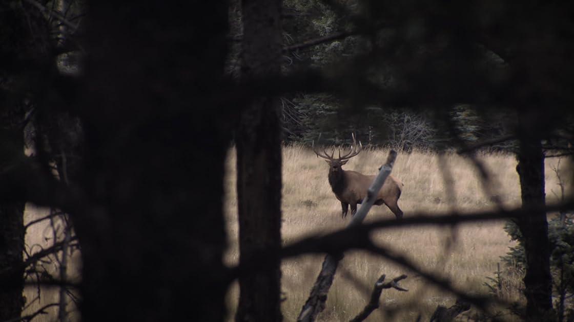 The Bronx Hunter II on Amazon Prime Instant Video UK