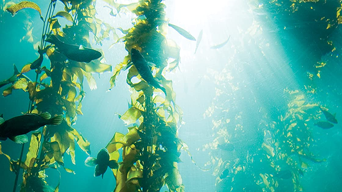 Wondrous Secrets of the Ocean Realm: Life in the Sea on Amazon Prime Instant Video UK