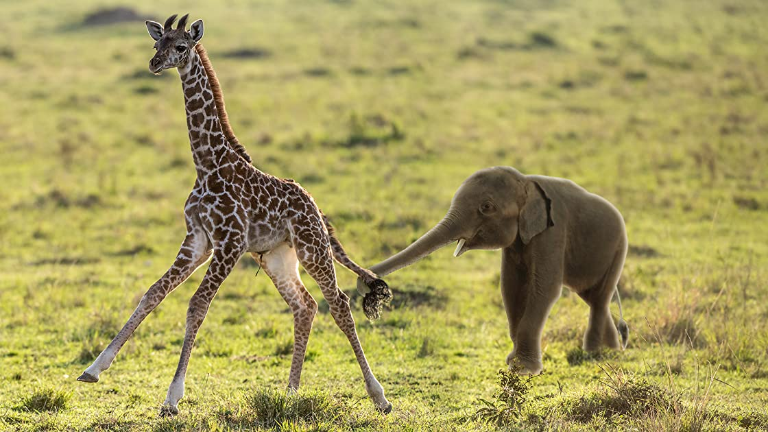 The Baby Elephant & The Baby Giraffe