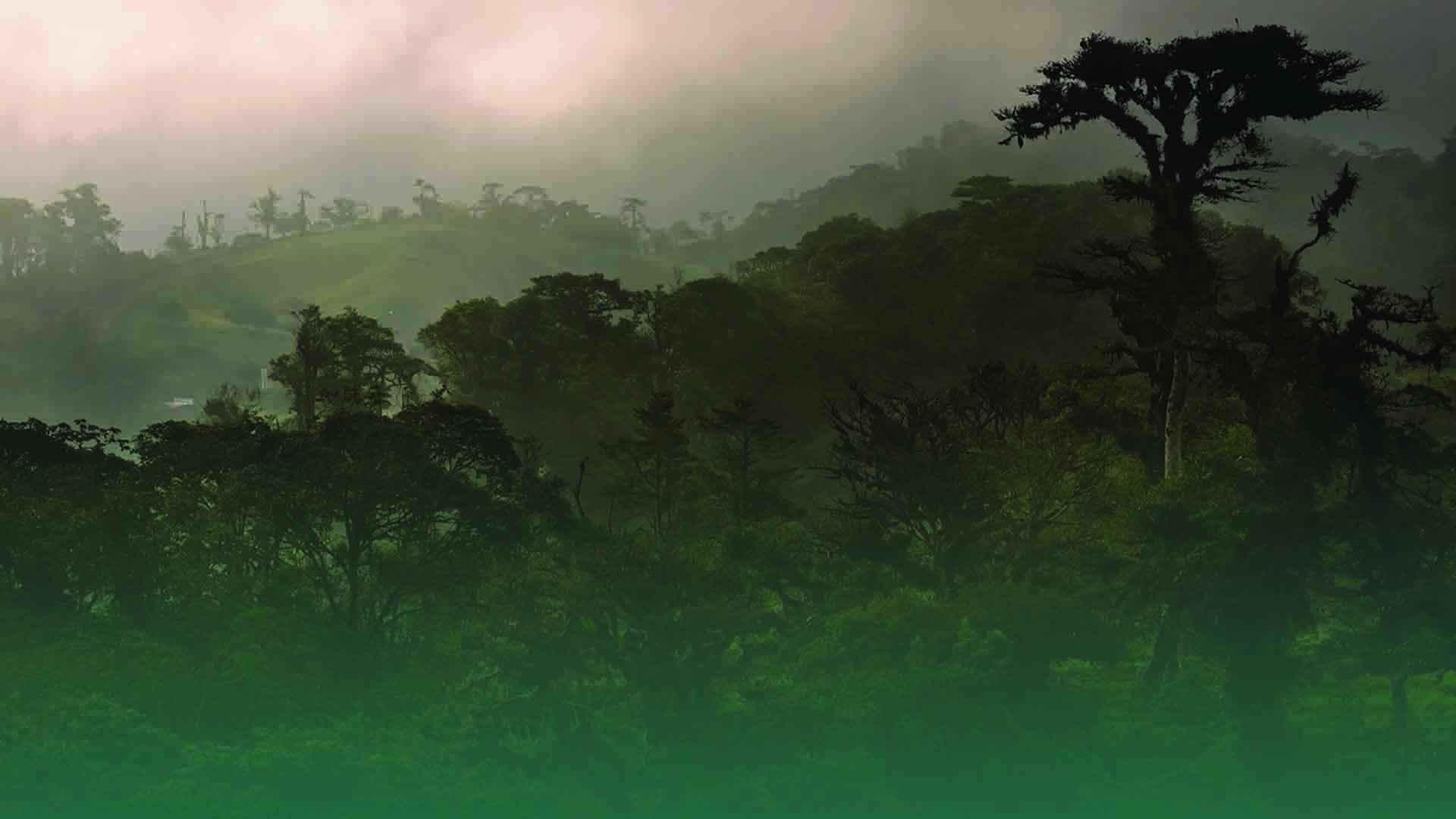 Wild Life on Amazon Prime Video UK