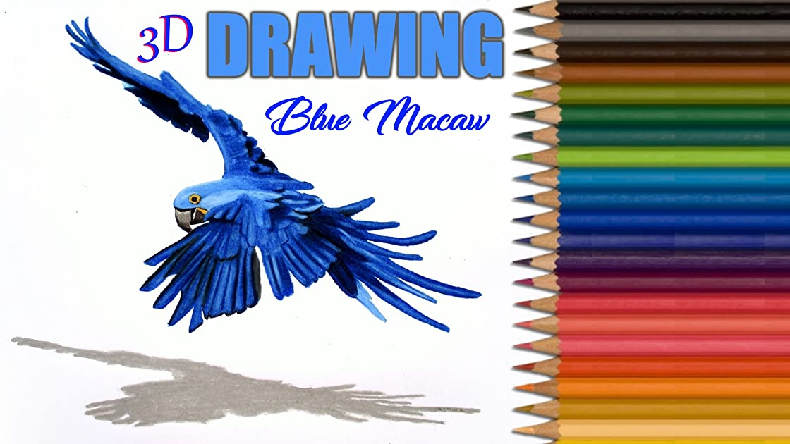 Clip: 3D Drawing Blue Macaw