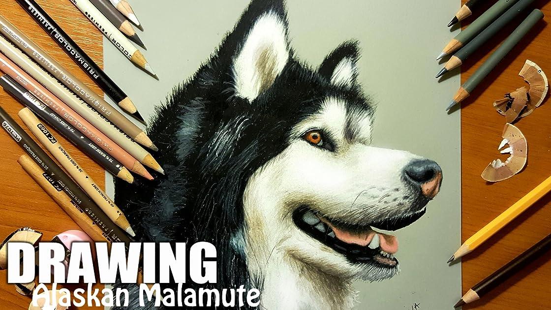 Clip: Drawing Alaskan Malamute