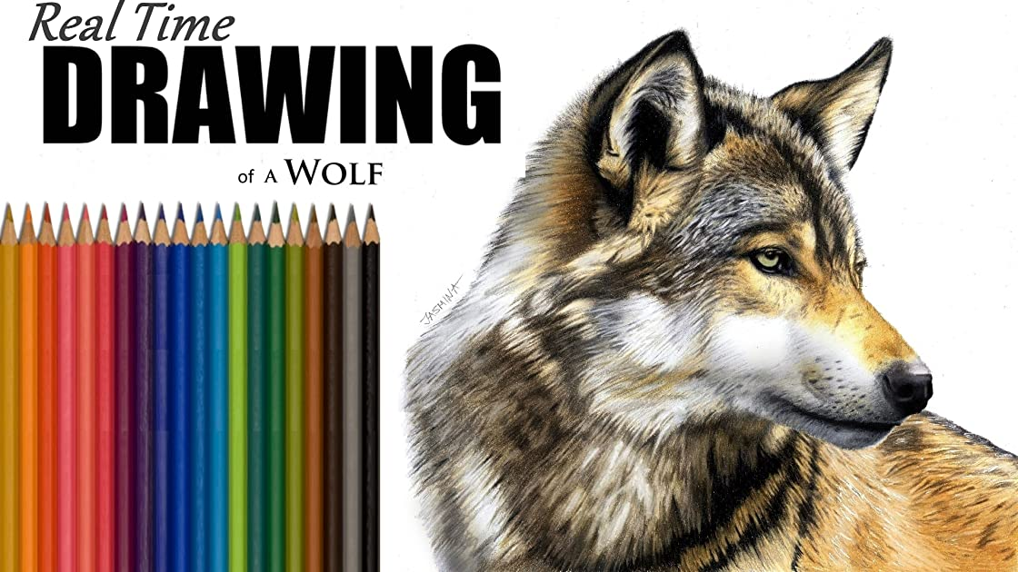 Real Time Drawing of a Wolf - Season 1
