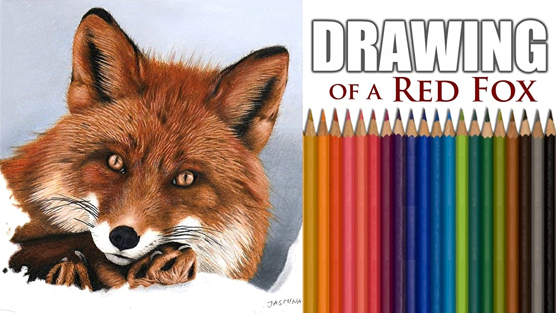 Clip: Drawing of a Red Fox