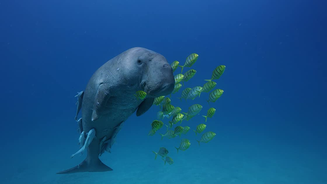 Beneath the Sea on Amazon Prime Video UK