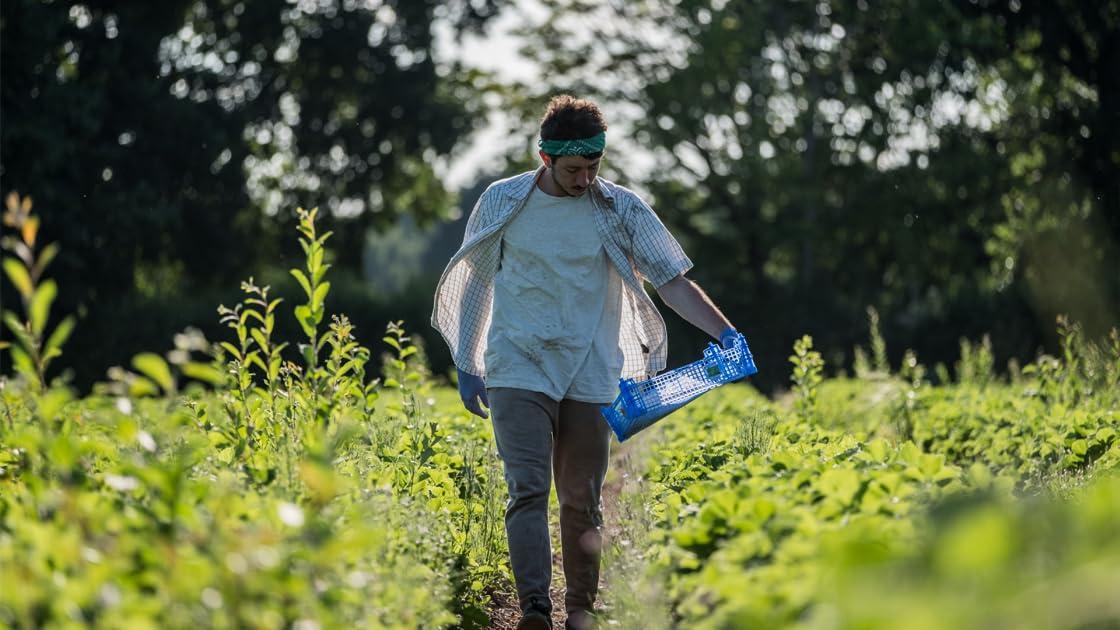 Harvest on Amazon Prime Video UK