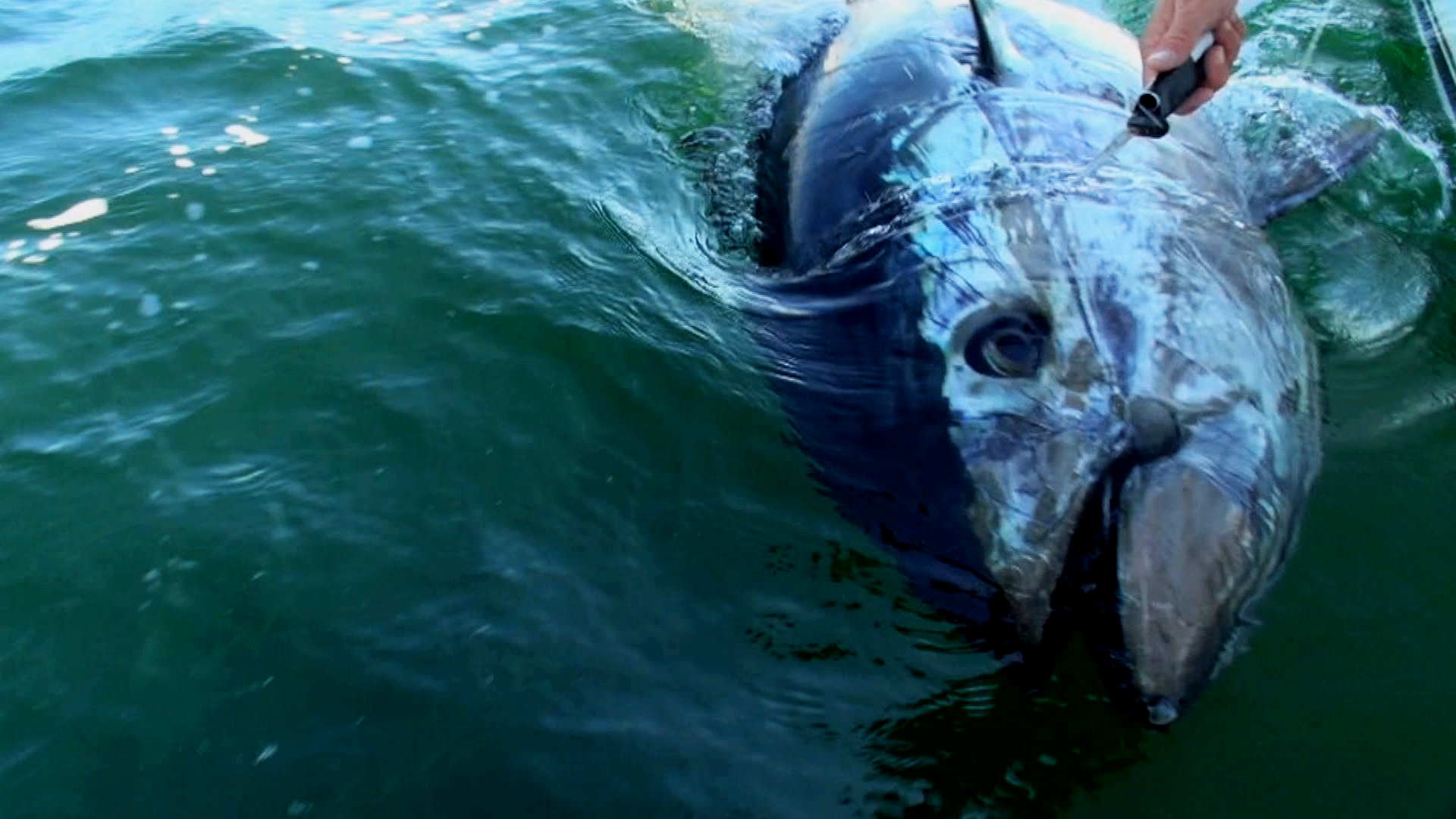 Inside Sportfishing on Amazon Prime Instant Video UK
