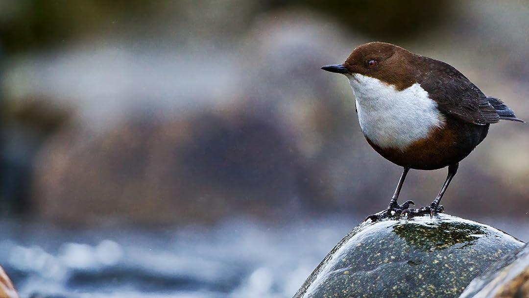 Loch Lomond : A Year In The Wild