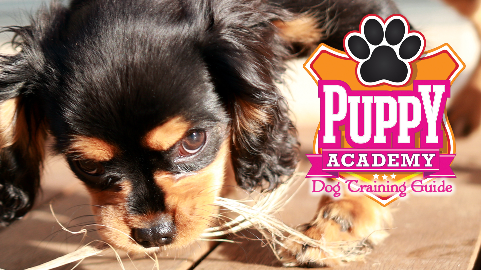 Puppy Academy: Dog Training Guide