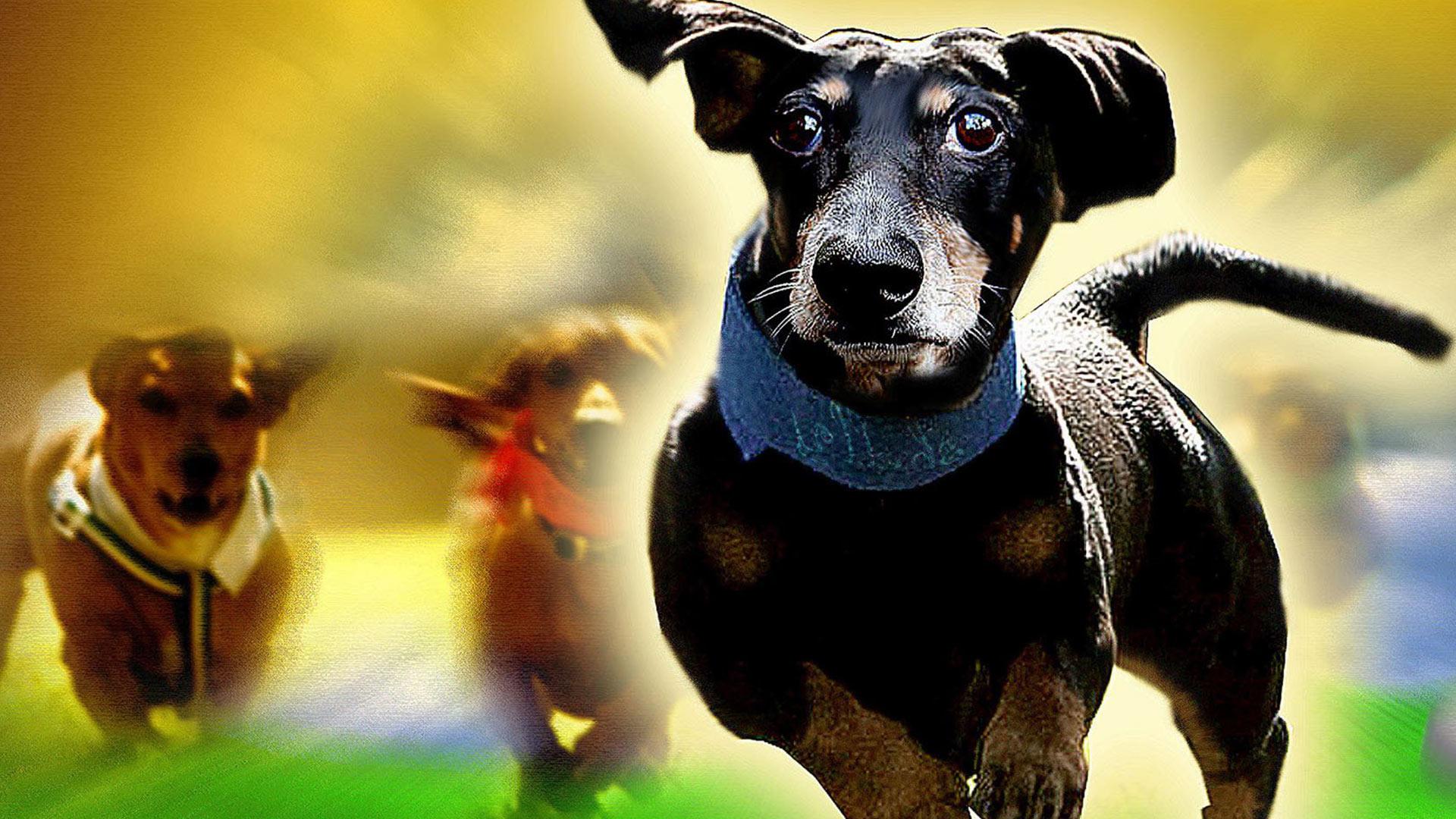 wiener dog nationals full movie online free